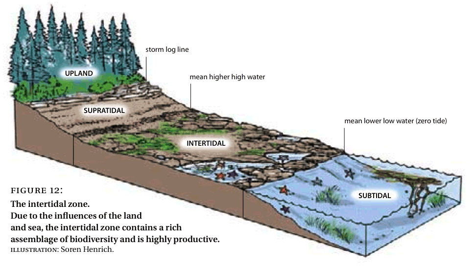 Estuary Diagram Taking Natures Pulse biodiversity BC figure 12