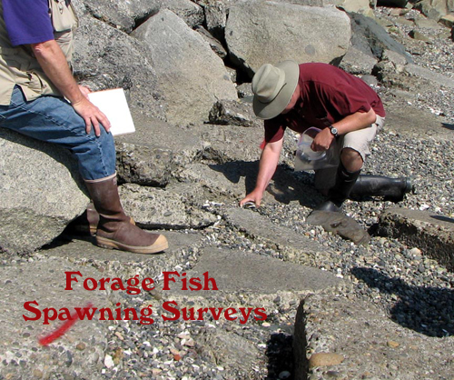 Forage fish survey