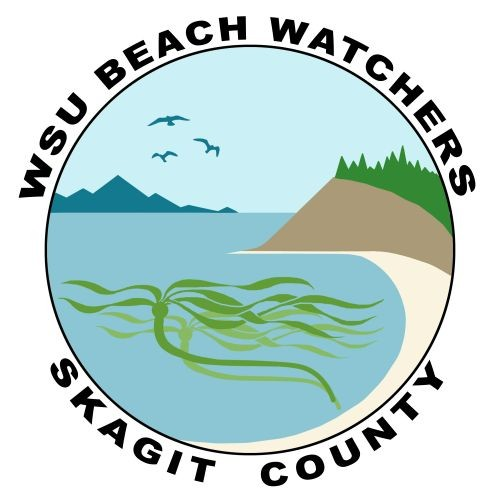 Skagit WSU Beach Watcher Coordintor Position Posted